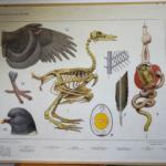 Bijplaat: Vogels in de winter (= achterkant van Zoetwatervissen)