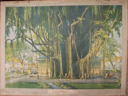 Waringinboom en Hotel des Indes.