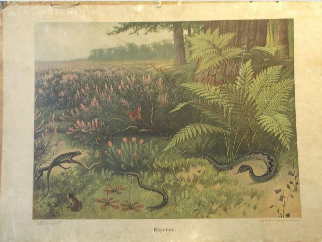 Reptiliën
