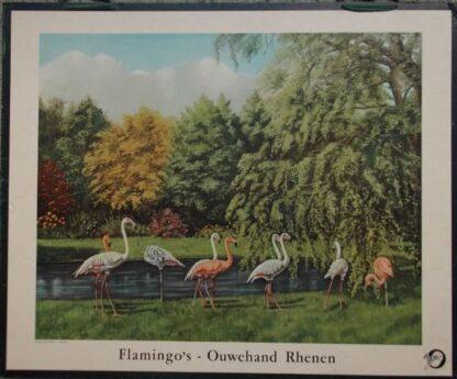 Flamingo's - Ouwehand Rhenen
